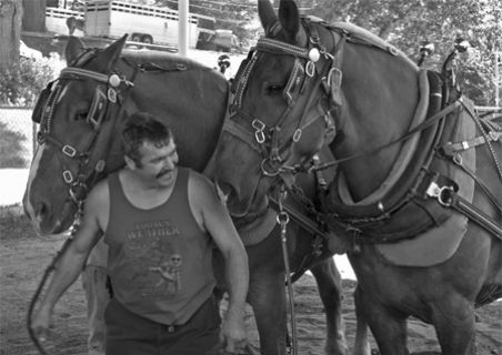 Preparing for draft-horse competition
